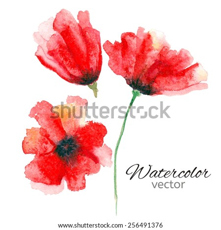 Watercolor poppies. Vector illustration. Floral background