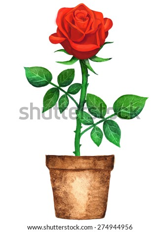 Watercolor Potted Red Rose Flower With Green Leaves In Pot Closeup Isolated On White Background