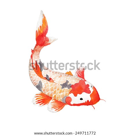Watercolor rainbow carp. Hand drawn natural fish isolated on white background. Vector oriental wildlife illustration. Single object - stock vector