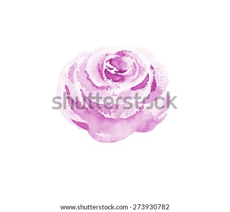 watercolor rose isolated