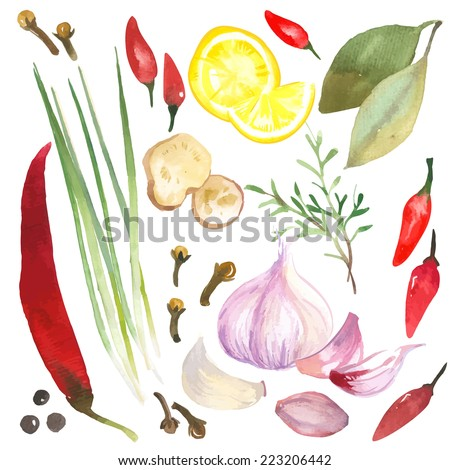 Watercolor set of herbs and spices drawn by hand on a white background. - stock vector