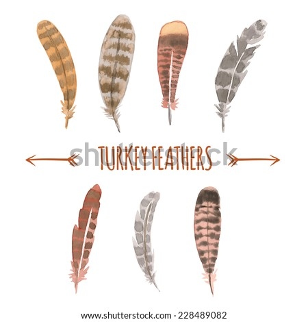 Pictures of turkey feathers