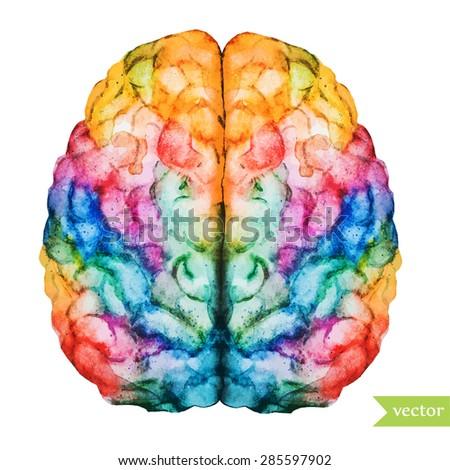 watercolor vector illustration colored brain two hemispheres - stock vector