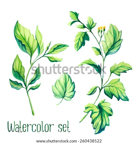 Watercolor vector leaves set - stock vector