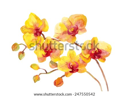 Watercolor vector orchid flowers on white background. - stock vector