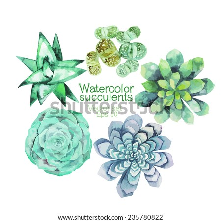 Watercolor vector succulents isolated on white background - stock vector