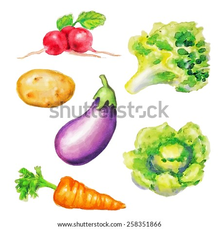 Watercolor vegetables pack on white background - stock vector