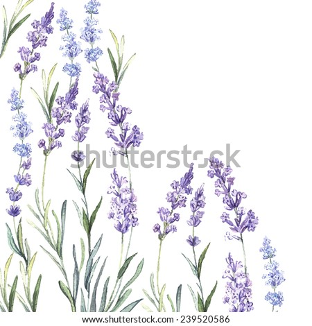 Watercolor vintage background of Lavender. Watercolor.Vector illustration. Illustration for greeting cards, invitations, and other printing projects.