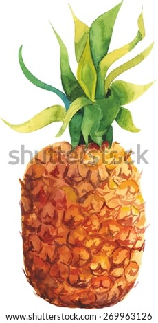 Watercolour pineapple, vector drawing - stock vector