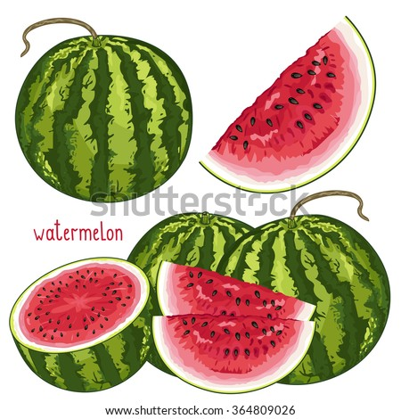 Watermelon isolated vector on white background