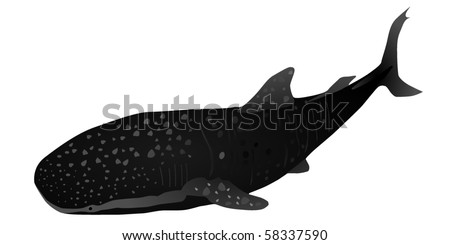 whale shark - stock vector