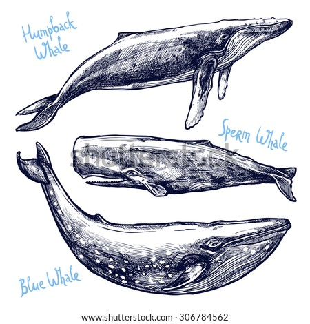 Whales Set, Collection Of Different Hand Drawn Whales - stock vector