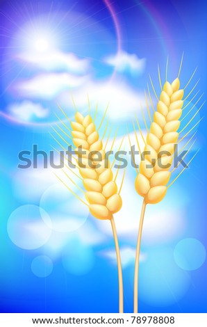 wheat - stock vector