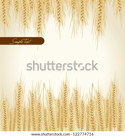 Wheat background natural product - stock vector