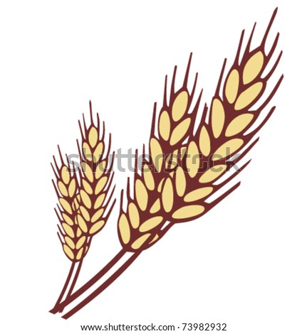 Wheat ear vector illustration - stock vector