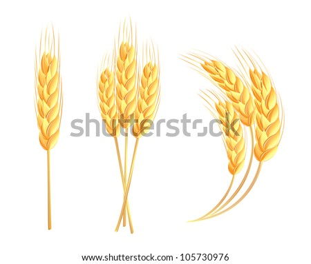 Wheat ears - stock vector
