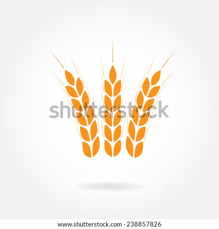 Wheat ears icon or sign. Crop or agricultural symbol isolated on white background. Design element for bread packaging or beer label. Vector illustration.  - stock vector