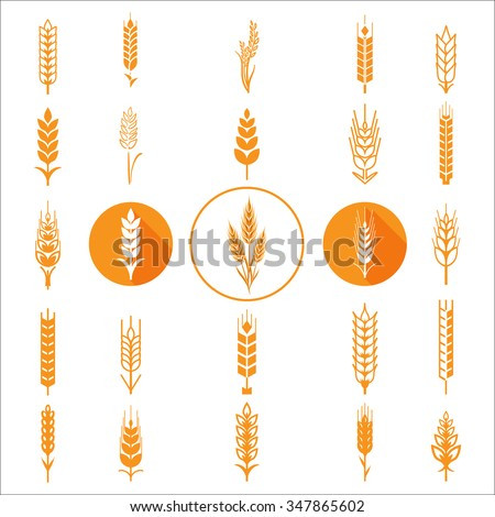 Wheat Ears Icons and Logo Set Natural Product Company and Farm Company Organic wheat, bread agriculture and natural eat. Contour lines, Flat design, Circle icons, Realistic image Vector illustration - stock vector