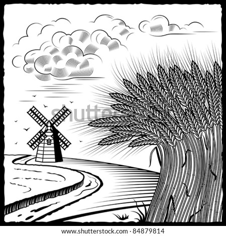 Wheat fields black and white. Vector - stock vector