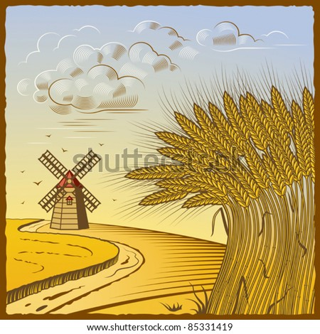 Wheat fields. Vector - stock vector