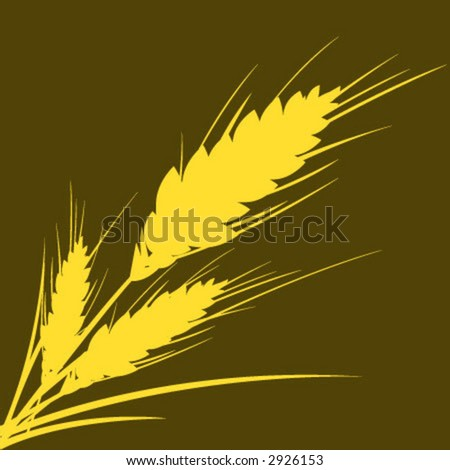 wheat isolated - stock vector