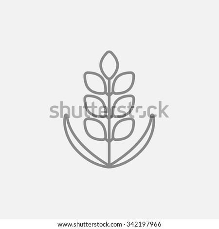 Wheat line icon for web, mobile and infographics. Vector dark grey icon isolated on light grey background. - stock vector