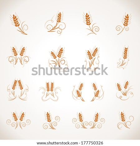 Wheat Set - Isolated On Gray Background - Vector Illustration, Graphic Design Editable For Your Design. - stock vector
