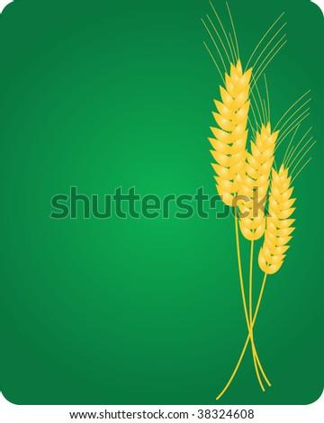 Wheat. Vector illustration - stock vector