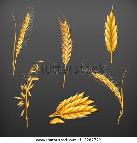 Wheat vector set - stock vector