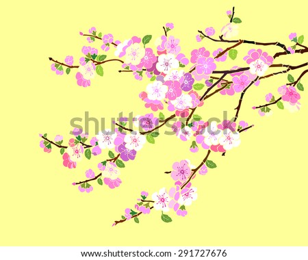 White Cherry blossom, sakura flowers isolated on yellow background. Vector Illustration