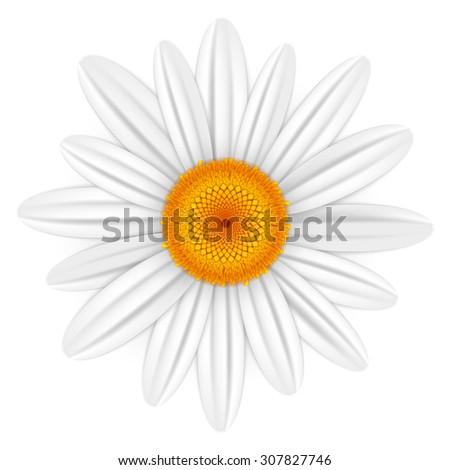 White daisy - stock vector