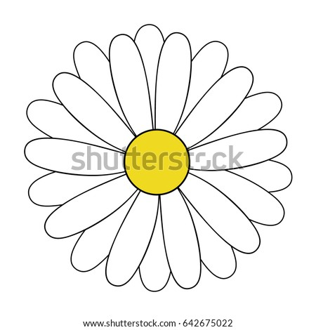 White daisy flower vector illustration, daisy blossom hand drawing icon isolated on transparent background.