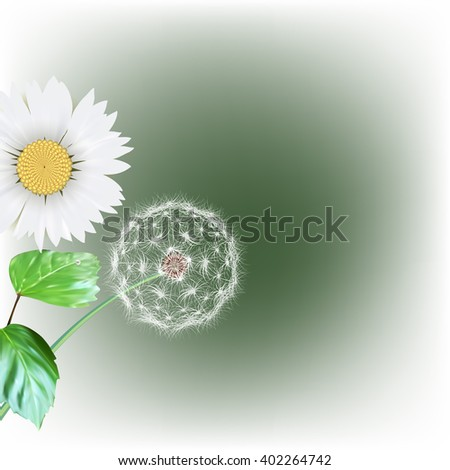 white dandelion seeds, nature, vector - stock vector