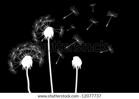 white dandelions on black - stock vector