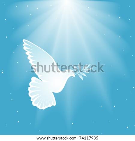 White dove - stock vector