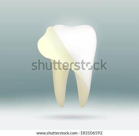 white human tooth - stock vector