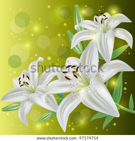 White lily flowers background, greeting or invitation card, vector illustration