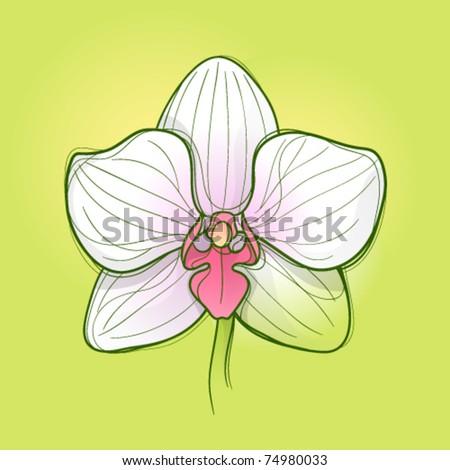 White orchid flower - stock vector