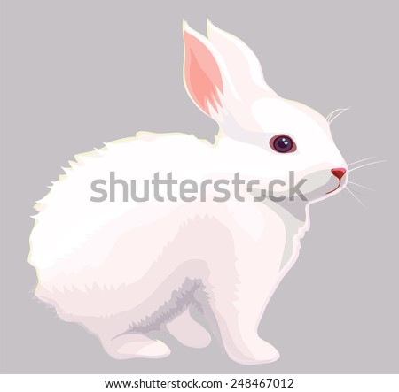 White rabbit - stock vector