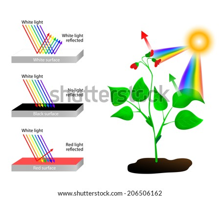 white reflects all colors of light. An object that looks red reflects only red light and absorbs all the other colors. Something that appears black absorbs every color and reflects none - stock vector