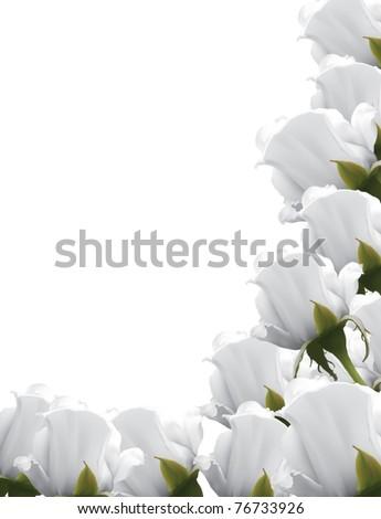 white roses background - stock vector