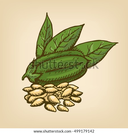 White Sesame Seeds with pod and leaves. Vector illustration. Hand drawn illustration.