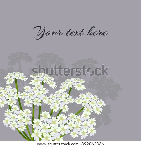 White umbel flower. Daucus carota ( common names wild carrot, bird's nest, bishop's lace or Queen Anne's lace).  Flowering plant. Vector illustration. - stock vector