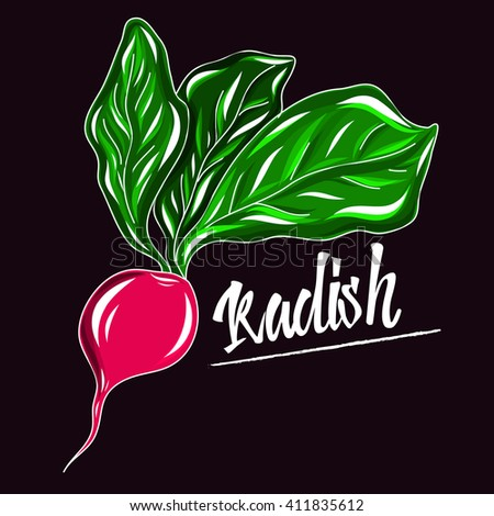 Whole pink radishes with leaves, half and flower isolated on black background. Vector illustration.Healthy organic food.  - stock vector