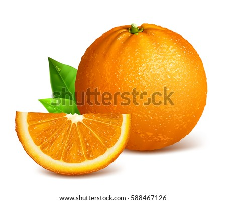 Whole ripe oranges and slices. Vector illustration of orange. Fully editable handmade mesh.