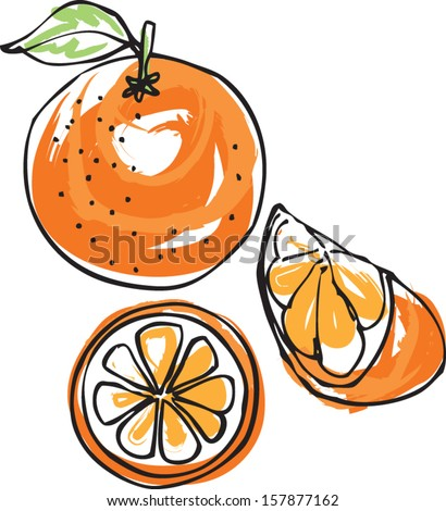 Whole sliced & segment orange vector illustration - stock vector