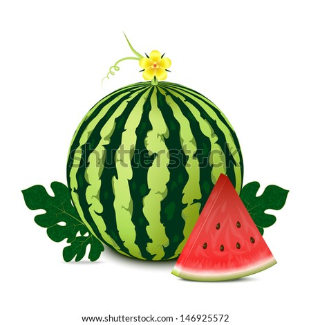 Whole watermelon with slice and leaves. Isolated on white background. Vector illustration.  - stock vector