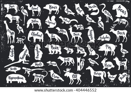 Wild animals isolated silhouettes with lettering: bear, frog, pig, wolf, mole, mouse, woodpecker, mouse, crow, elk, tiger, camel, flamingo, lion, zebra, eagle, giraffe, monkey, elephant. Vector