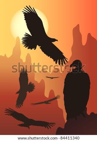 wild birds in the wild nature - stock vector