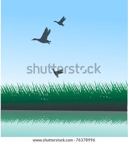 wild ducks - stock vector